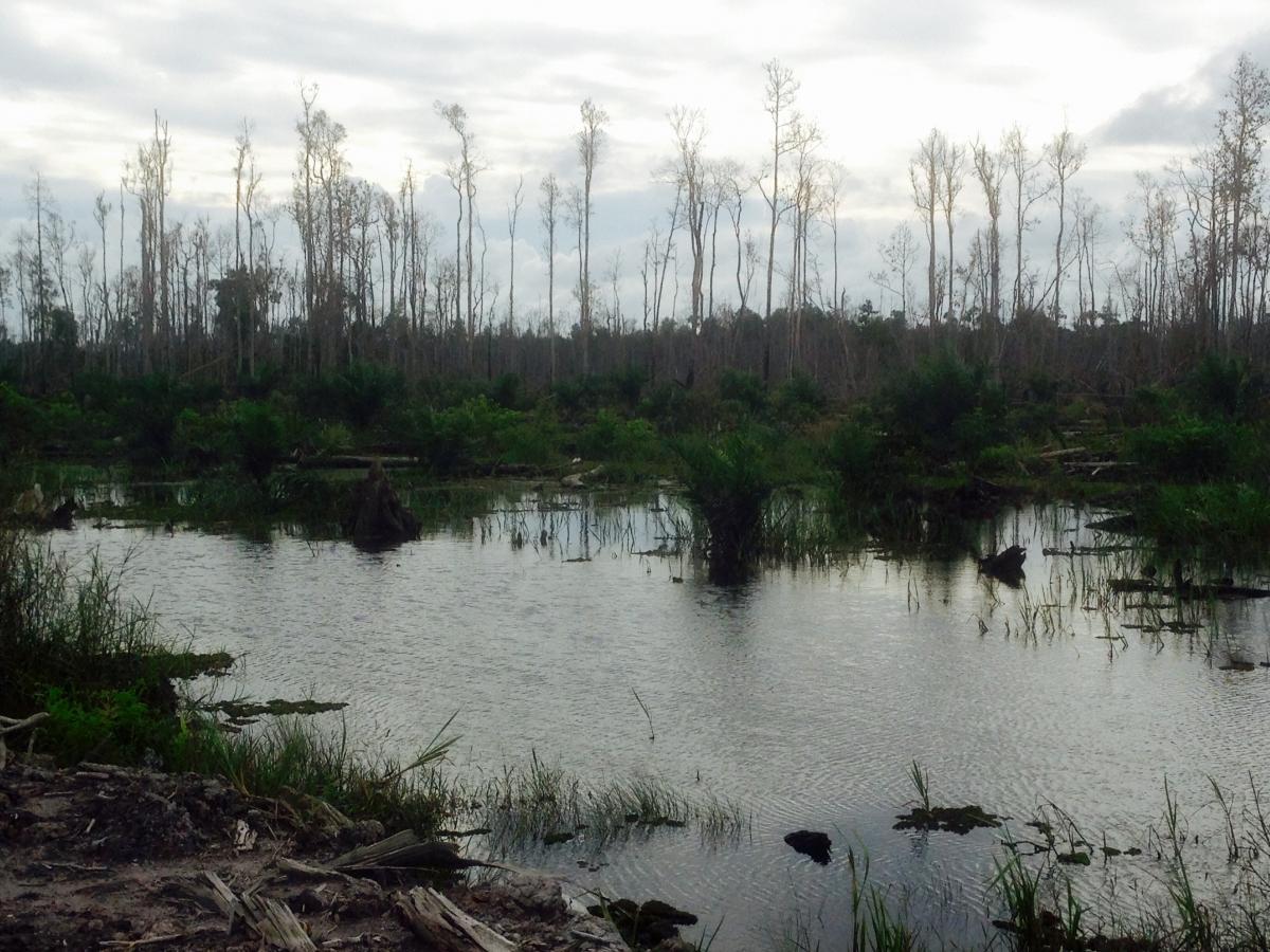 A failed oil palm plantation in South Kalimantan. (Photo: Anna-Sophie Springer)